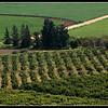 ISRAEL HAGILBOA  2010/02
