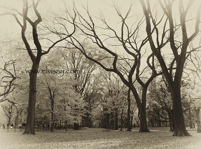 """Central Park, New York"""