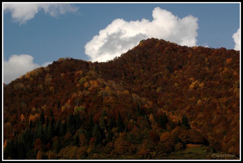 georgia 2009/10