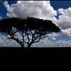 TANZANIA/SERENGETI 2010/10