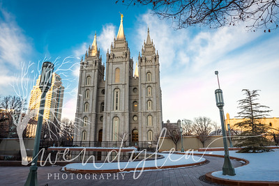 wlc swans and slc temple29February 06, 2016