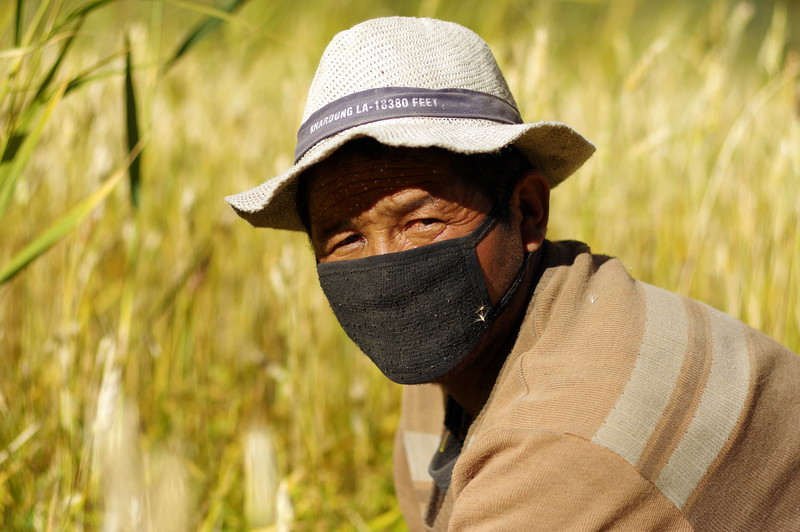 Harvesting season in Skiu