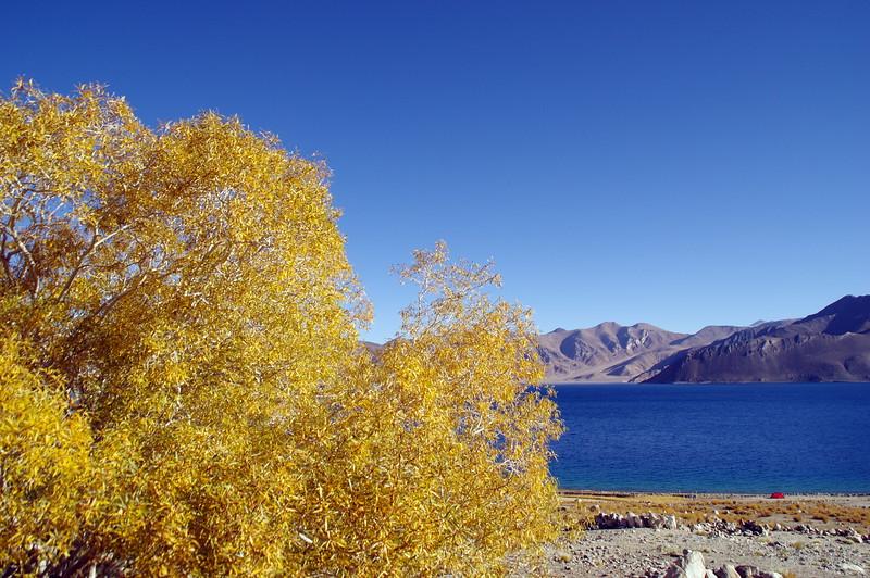Autumn at Pangong Lake