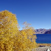 Autumn at Pangong Lake