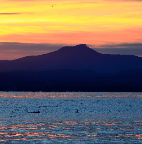 Loons on Lake Champlain with sunrise over Camel's Hump, Vt.