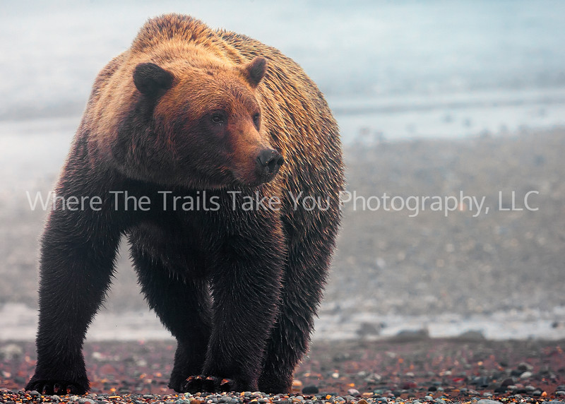 10.  Bear in the Morning Mist