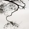 Branch, Hawes End, Derwent Water