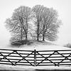 Snow trees near Esthwaite Water