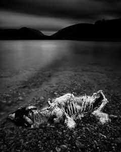 Dead Sheep, Grasmere, The Lake Distict