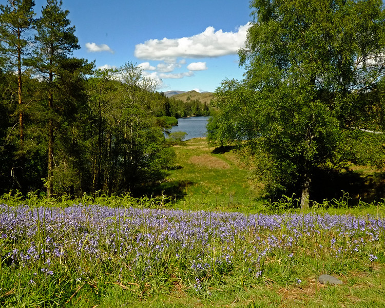 National Trust Tarn Hows and Tom Gill Falls.