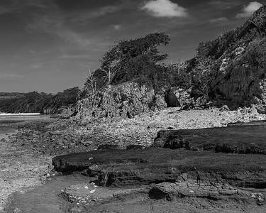 Silverdal windswept shore