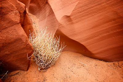 Tumbleweed's Final Resting Place