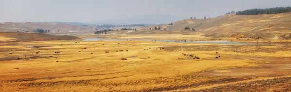 All those brown dots are bison. Hundreds of them. Hayden Valley, Yellowstone National Park