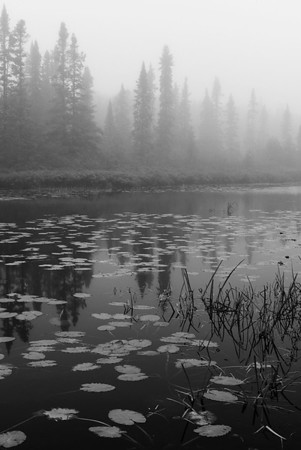 Misty Morning in Lake Superior State Forest, MN