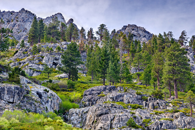 """Trees and Rocks in the Desolation Wilderness"" Lake Tahoe, California. Great hikes can be had just up from Emerald Bay in Lake Tahoe. The Desolation Wilderness has beautiful trees, rocks and vistas. Add that to your list next time you are in Lake Tahoe."