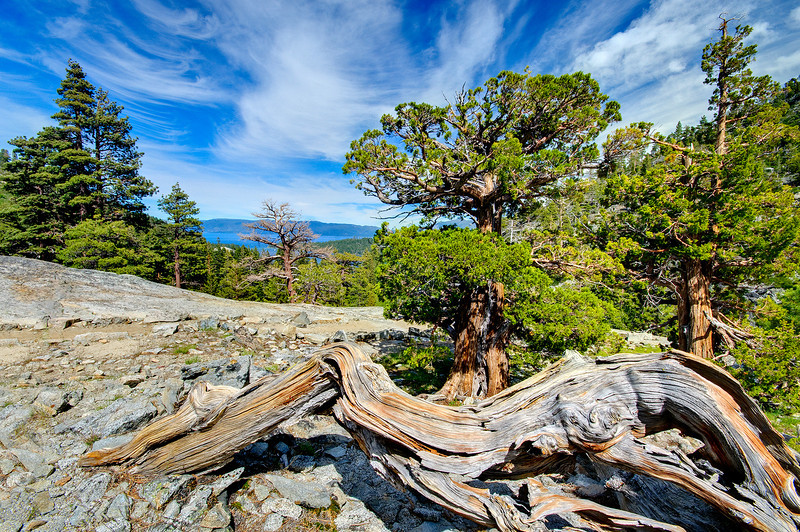 """Twisted Pine and Wispy Clouds over Emerald Bay Lake Tahoe"" - This is in the Desolation Wilderness on the way to Eagle Lake in Lake Tahoe. I didn't realize just how similar the twisted pine in the foreground was to the clouds up above! Emerald Bay in Lake Tahoe is in the background. Enjoy!"