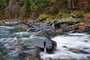 American River Canyon, Eldorado County, CA.