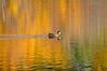 Pond, Kahle Meadow, Lake Tahoe, NV.