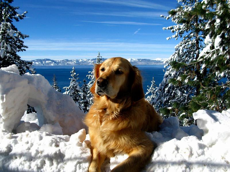 Winter, Lake Tahoe, 2010.