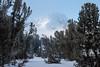 Carson Pass Winter 2014-7653