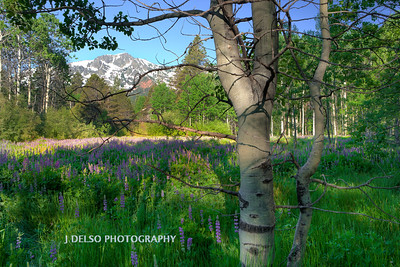 Cathedral Meadow Summer 2917-2