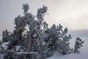 Carson Pass Winter 2014-7631