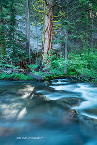 Tahoe Fall Creek 2017-2