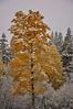 Early Fall Snowstorm, Lake Tahoe