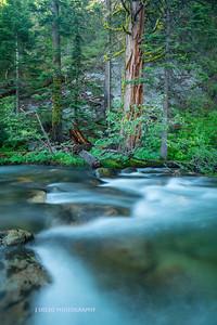 Tahoe Fall Creek 2017-1