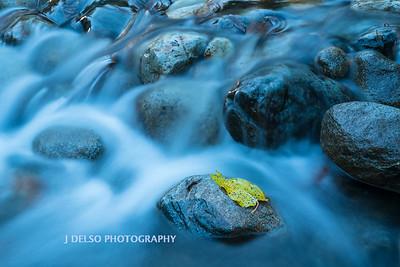 Taylor Creek Fall 2017-3