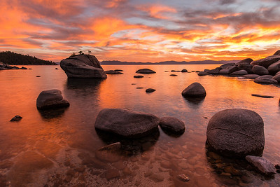 Bonsai Rock Blaze