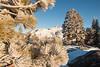 Carson Pass Winter 2014-7609
