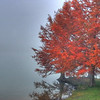 Autumn leaves in fog on the edge of Lake Ginninderra