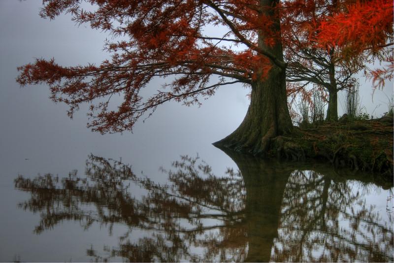 Autumn reflection in fog on the edge of Lake Ginninderra