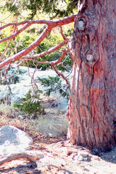 Near Emerald Bay, Lake Tahoe, California
