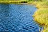 pond-and-grass-hammonassett-park-connecticut-6428
