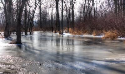 Frozen bog on Amherst Island, Ontario