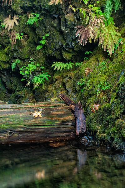 Oneonta Gorge, Columbia River Gorge