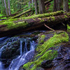 Bear Creek; Gifford Pinchot National Forest