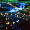 Canyon Trail Creek, Silver Falls State Park