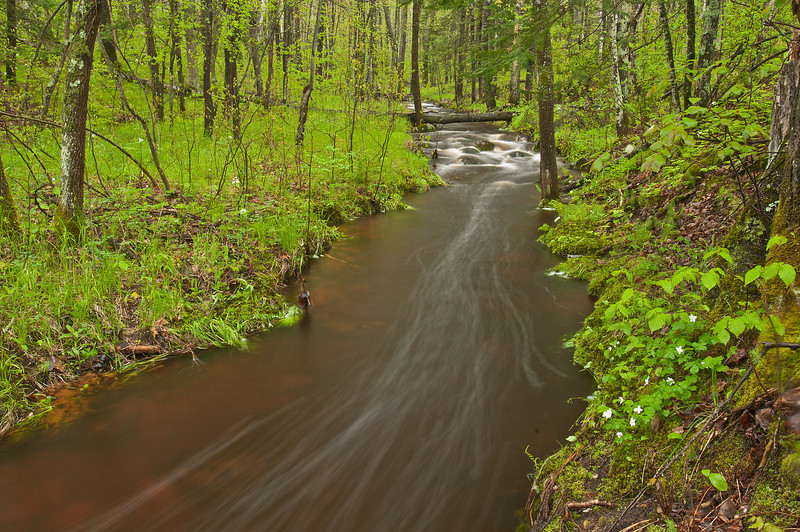 MNLR-11073: Log Creek after torrential rains