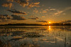 Setting sun at a wetland