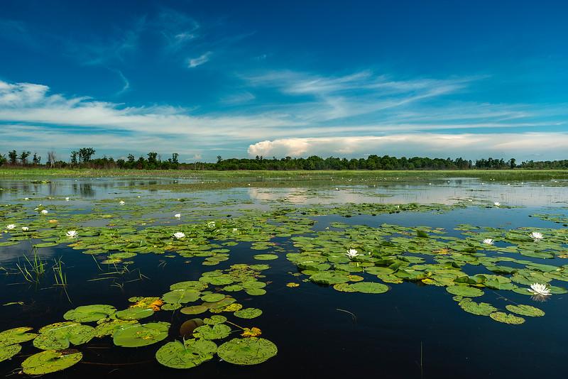 Wetland in bloom