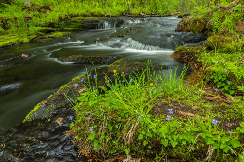 Spring flow at Wolf Creek