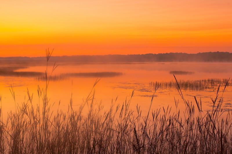 MNLR-11245: Big Bluestem grass at Phantom Lake