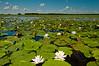 MNLR-10136: Phantom Lake environment