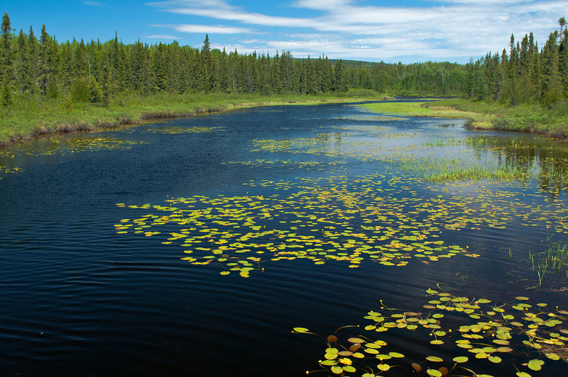 MNLR-12113: Lily Pads on Cascade River