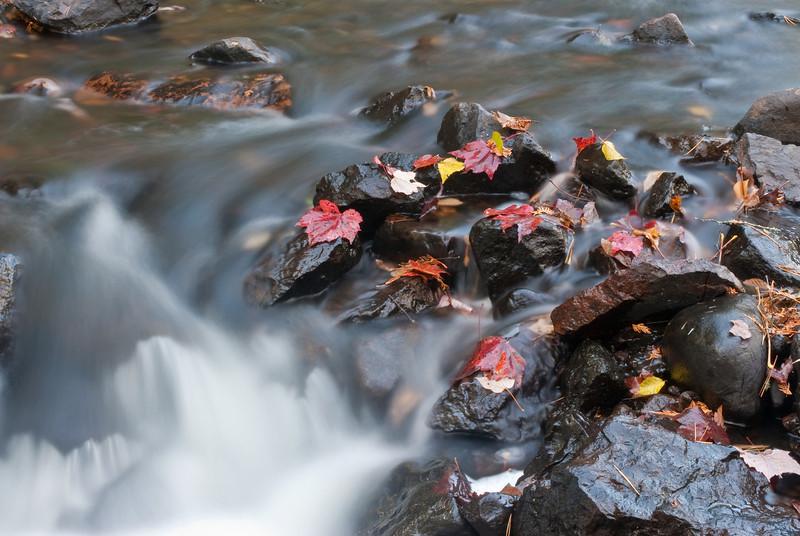 MNLR-9197: Fallen leaves on Mistletoe Creek
