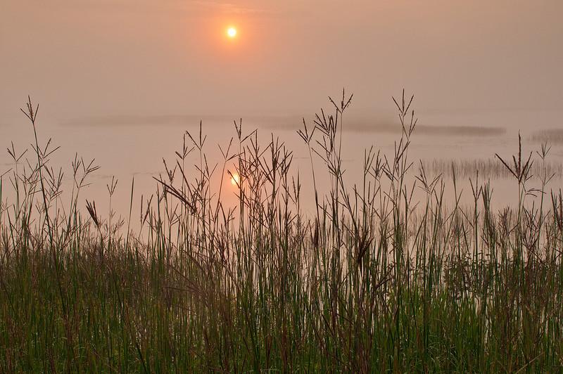 MNLR-11210: Big Bluestem grasses at Phantom Lake