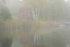 Foggy morning on Poplar lake